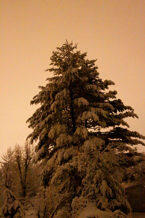 C'dale-night-snow-121229_02nr.jpg