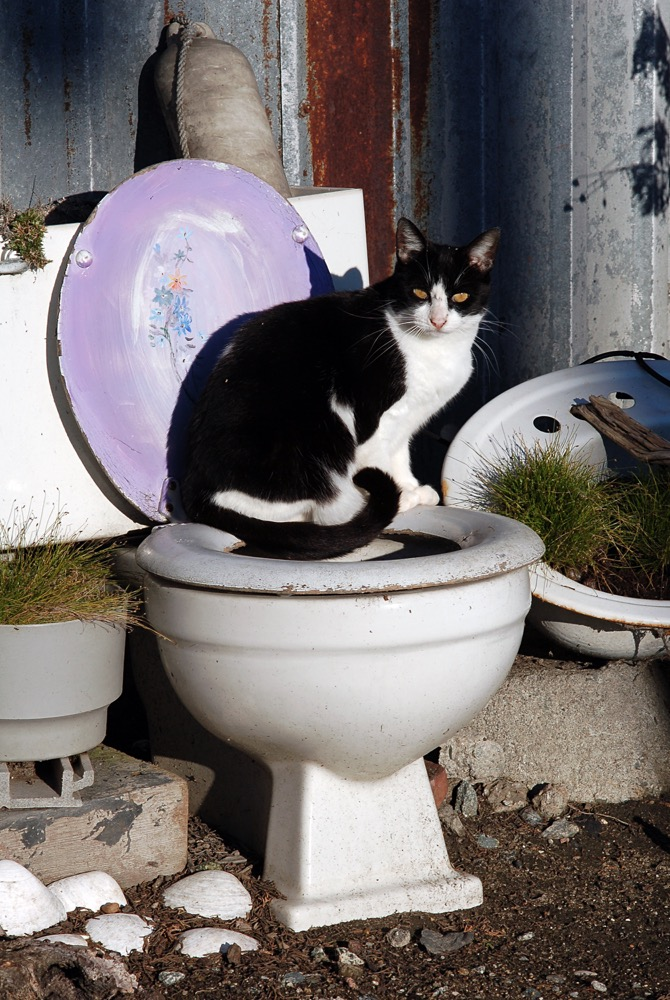 Moss Landing - Cat On Toilet 2.jpg
