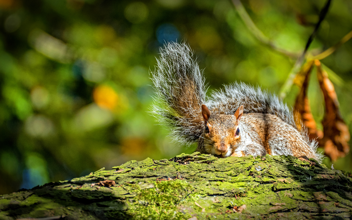 Squirrel portrait-web.jpg