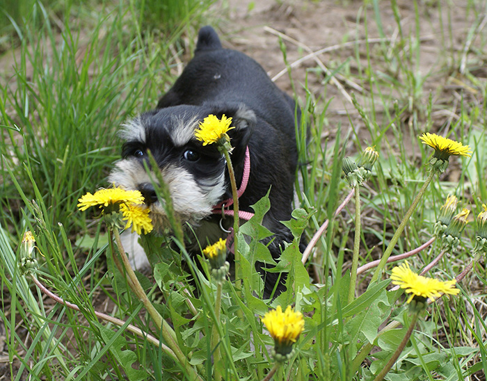 Bea puppy among flowers s.jpg