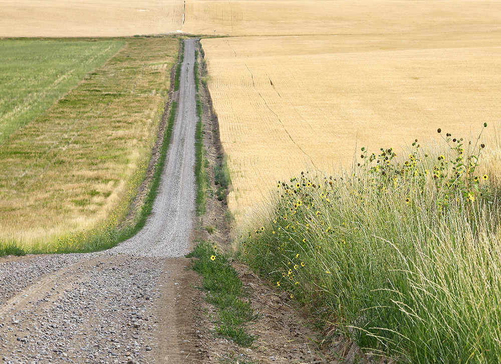 wheat field and road.jpg