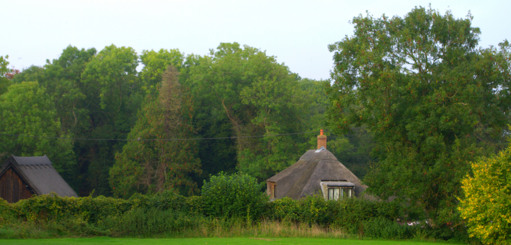 TONY0007 - thatched cottage with Woodpigeon.jpg