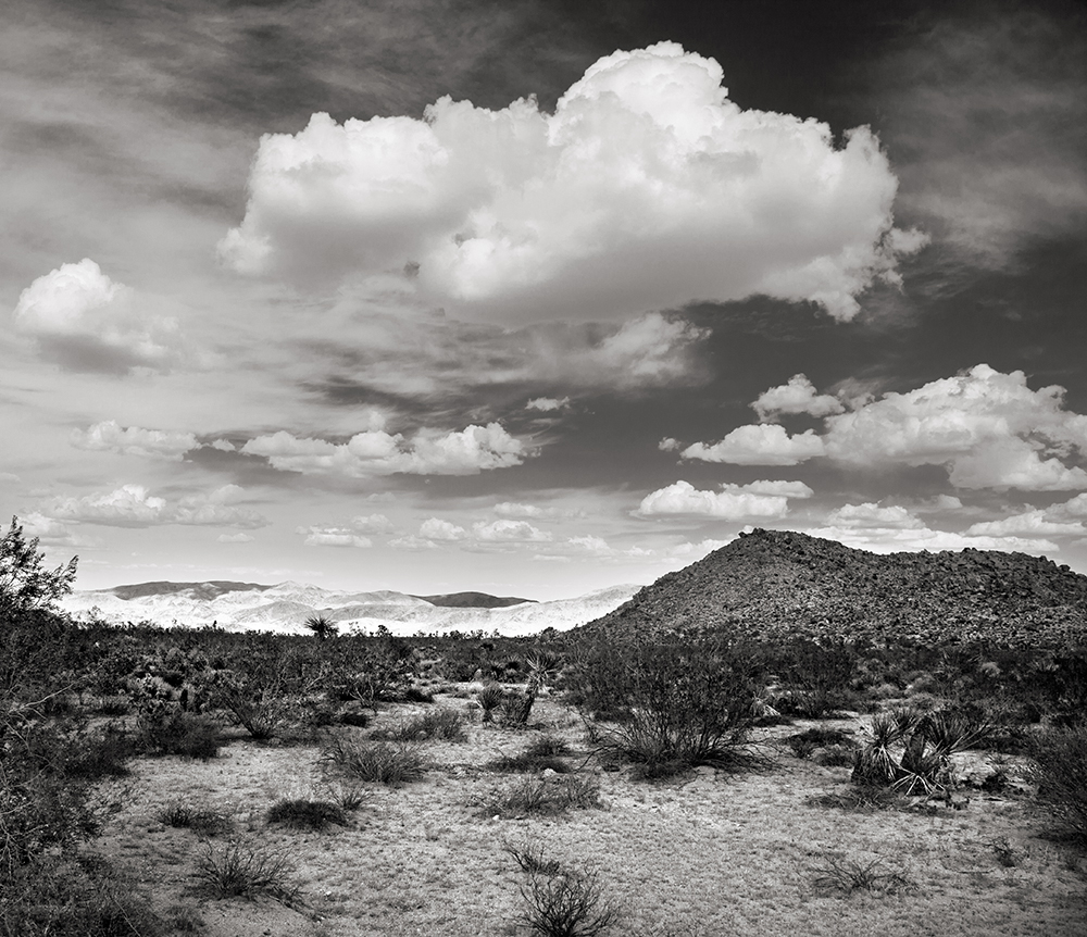 joshua-tree-bw_5017-CROP-w.jpg