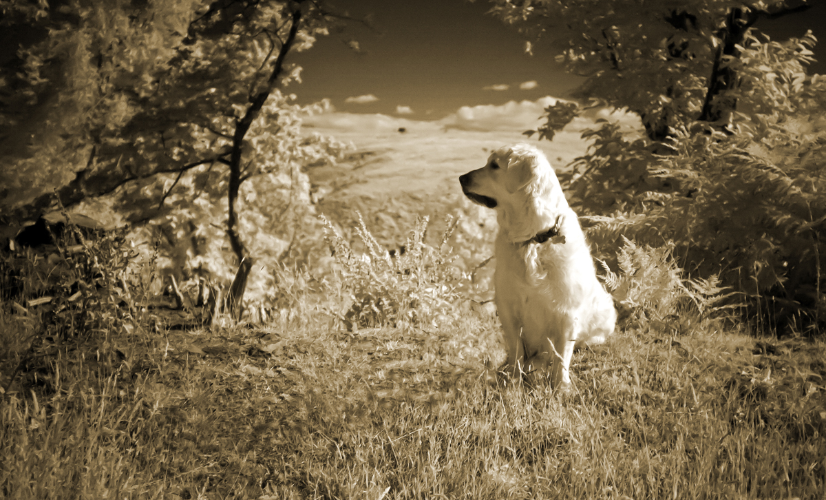 Dog on a hill-infrared-web.jpg