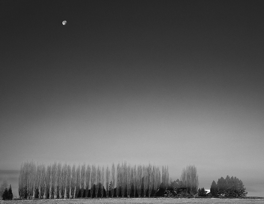 moon over trees s.jpg