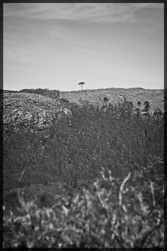 One tree hill B&W.jpg