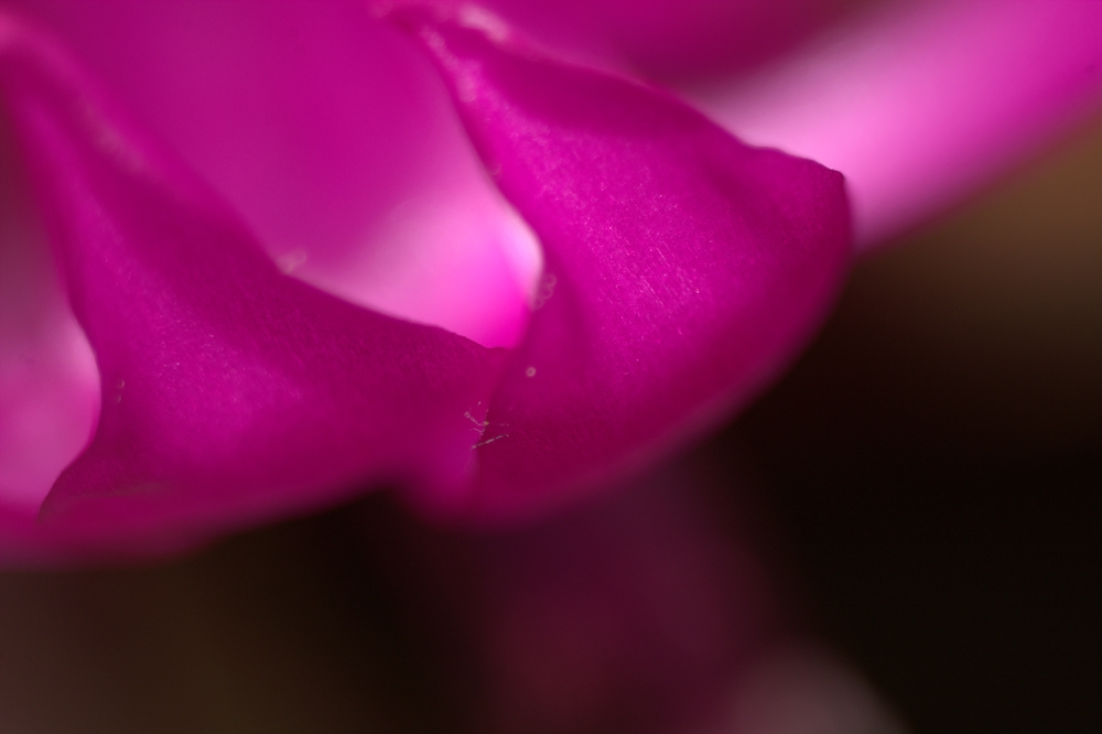abstract flower.jpg