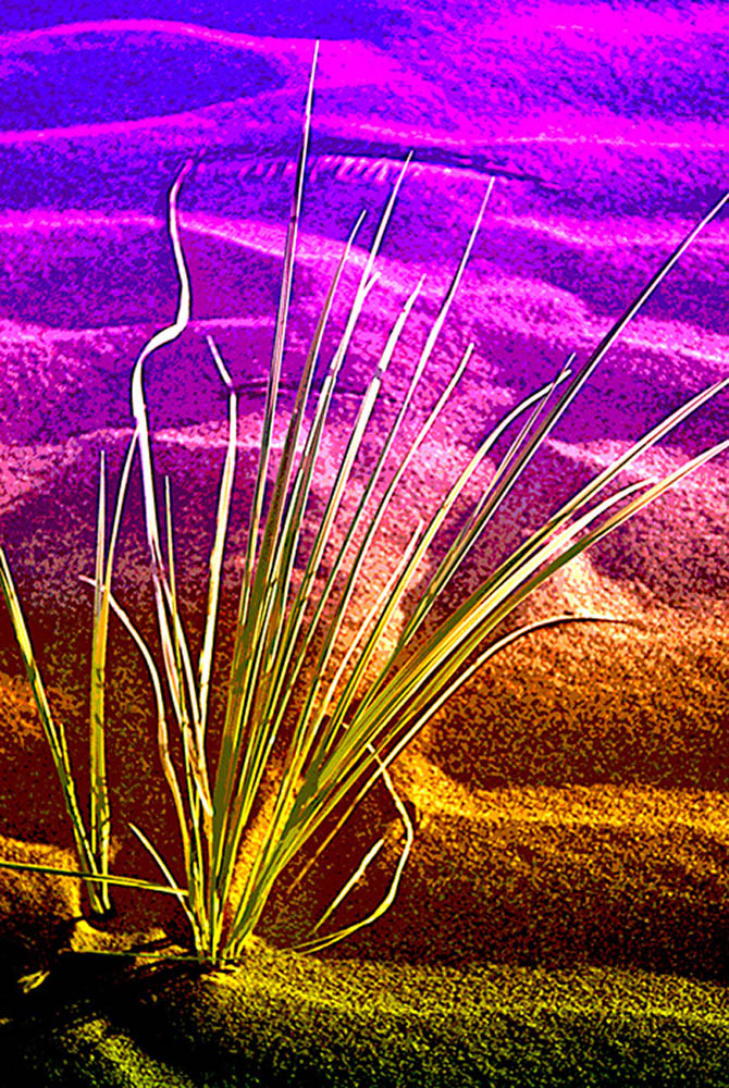 sand and weed abstract s.jpg