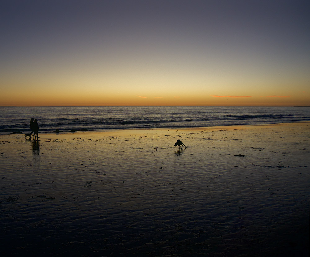 sunset dog walk goleta beach.jpg