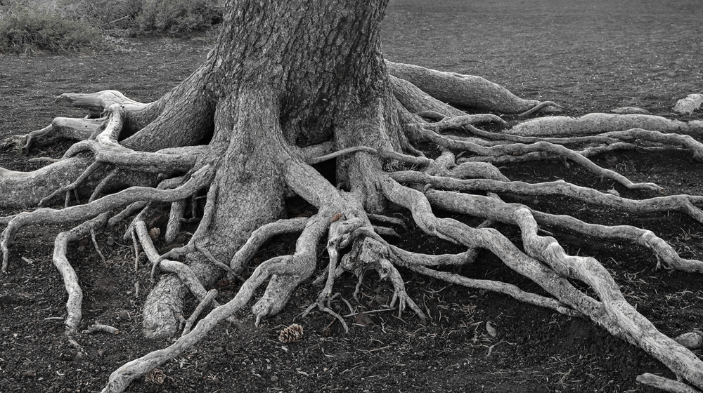 Gnarled Roots-01bw-sml.jpg