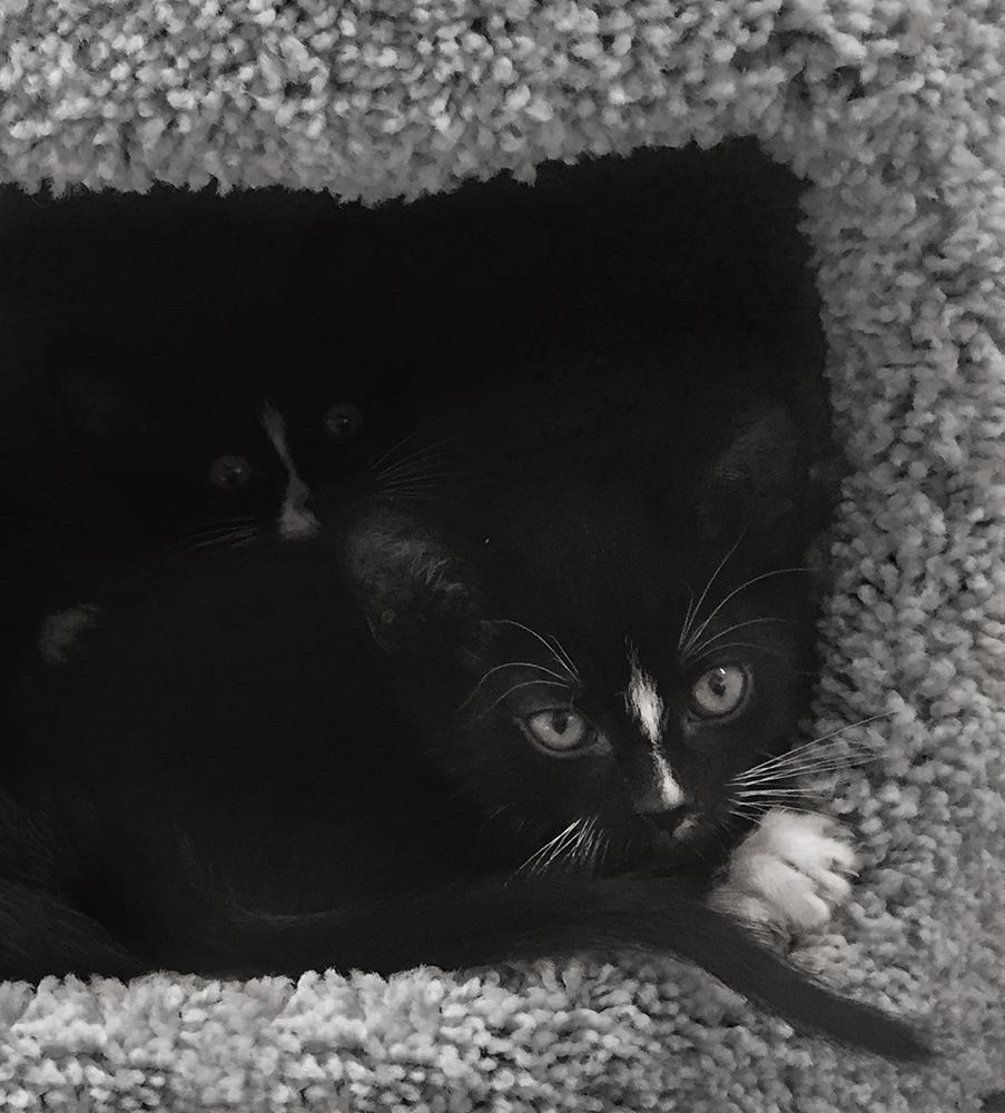 two-cats-cropped-bw_2775-w.jpg