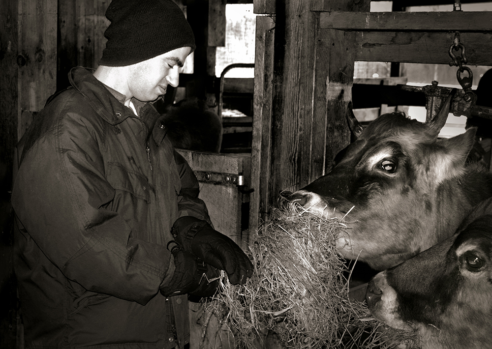 014-pete-feeding-cows-another-k-w.jpg
