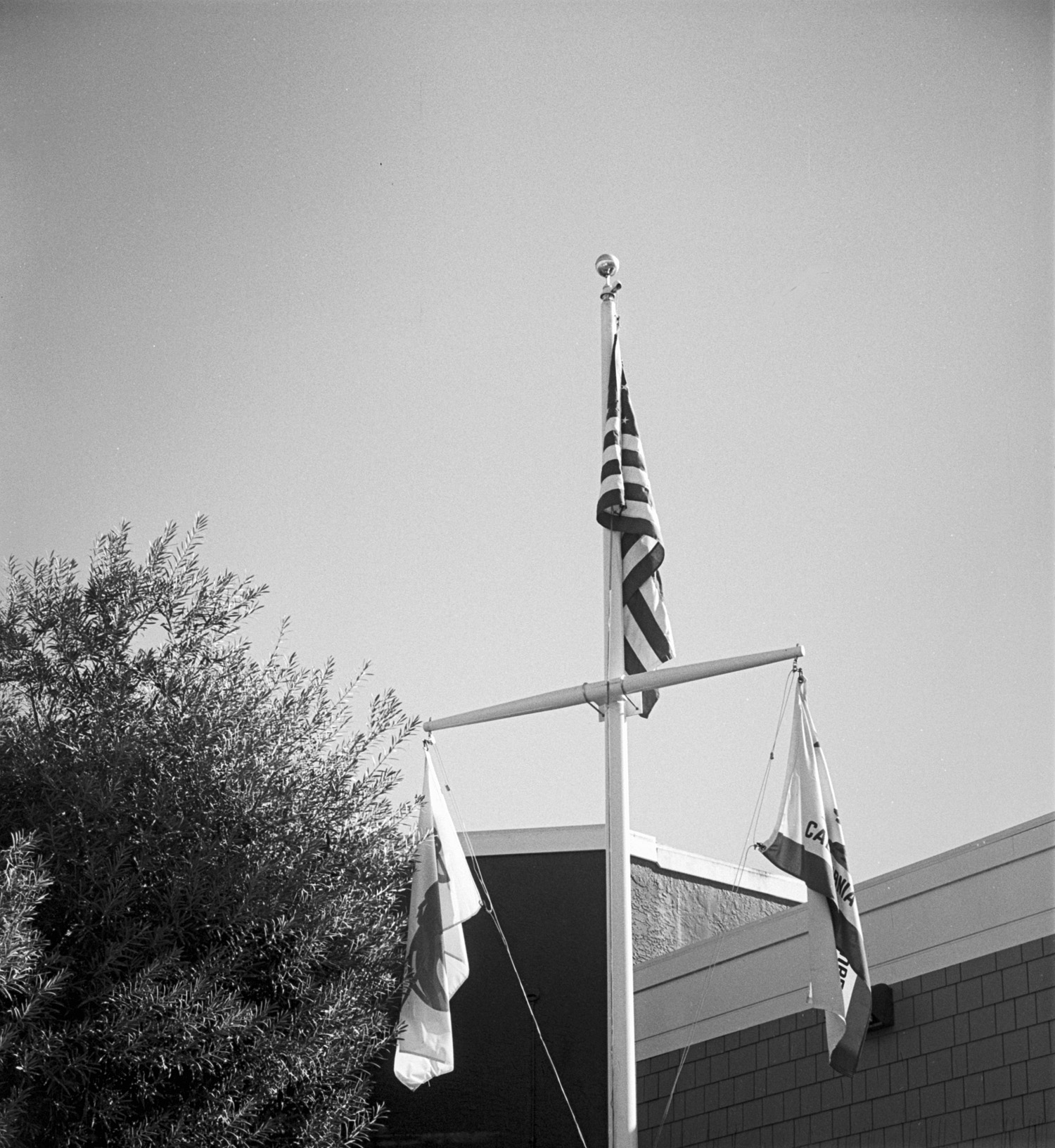 Yashica Electro 35 GSN HP5 Pyrocat HD flags cut off.jpg