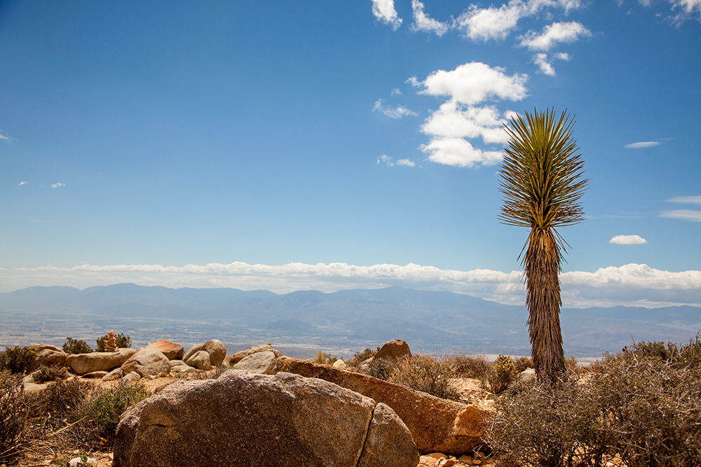 joshua-tree-one_4934-w.jpg