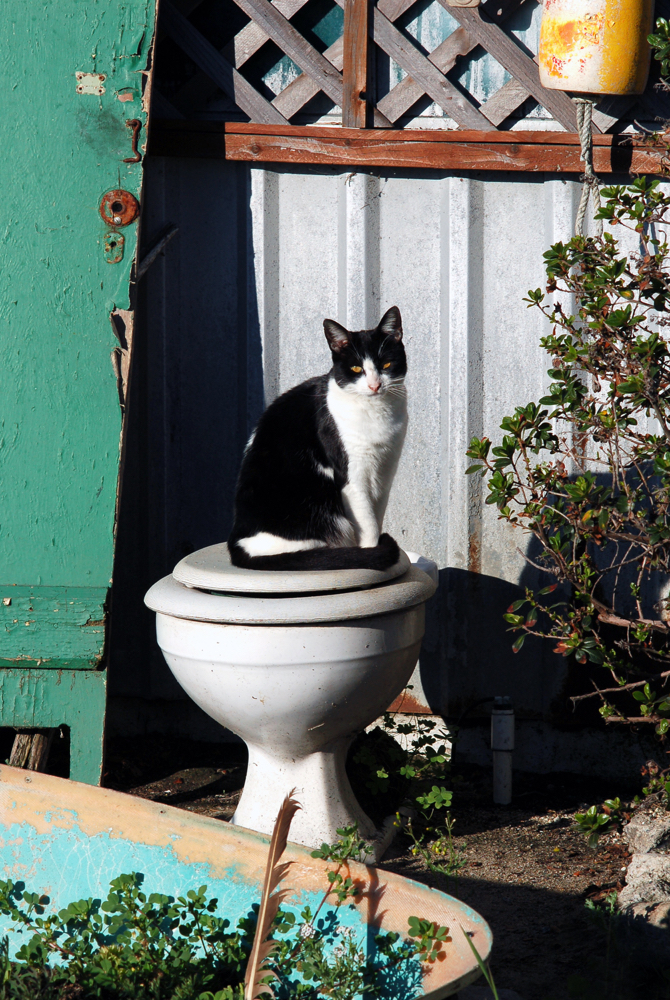 Moss Landing - Cat On Toilet 3.jpg