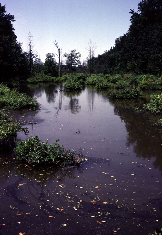 KY-Lower-Ohio-slough-as-it-was.jpg