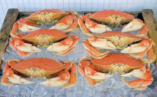 Fisherman's Wharf 11_Crabs_1.jpg