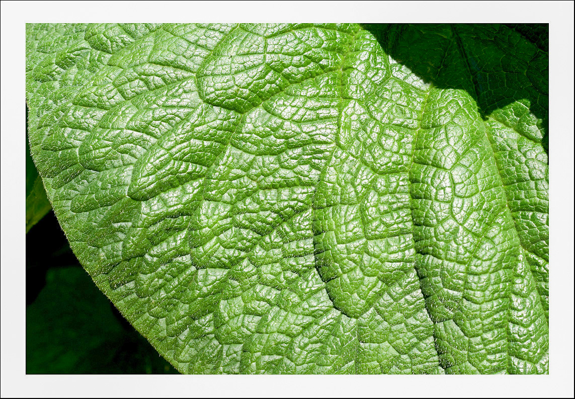 leaf close up.jpg