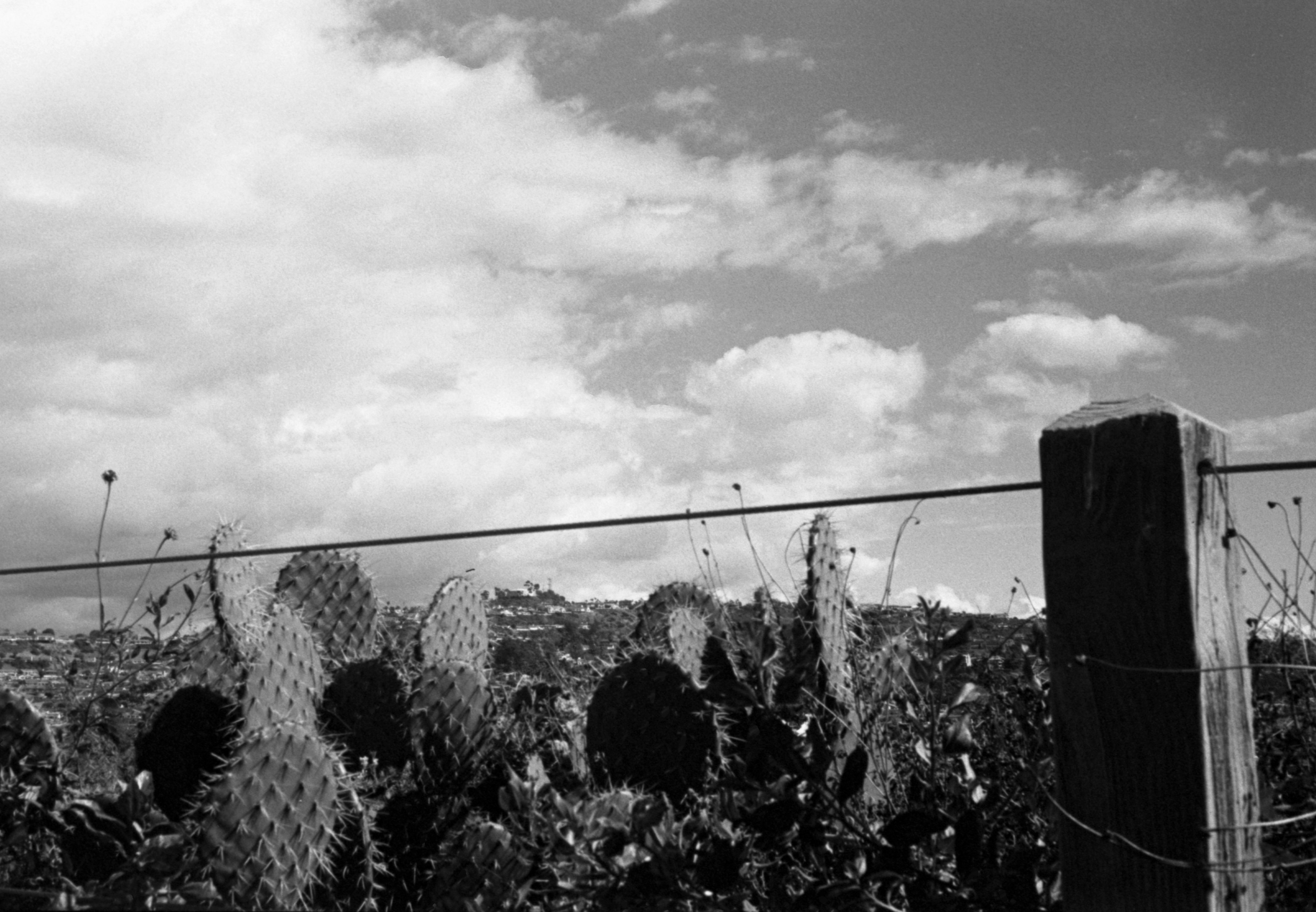 cacti and clouds.jpg