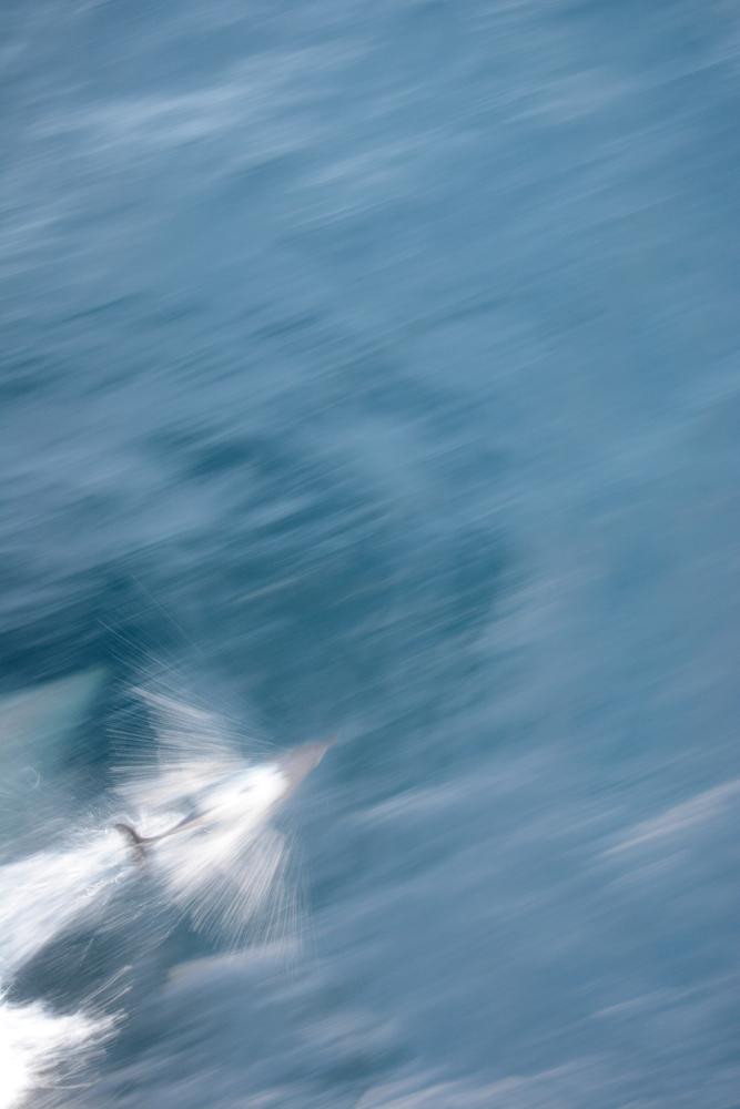 dolphin speed blur 2.jpg