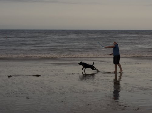 dog on beach chasing ball.jpg