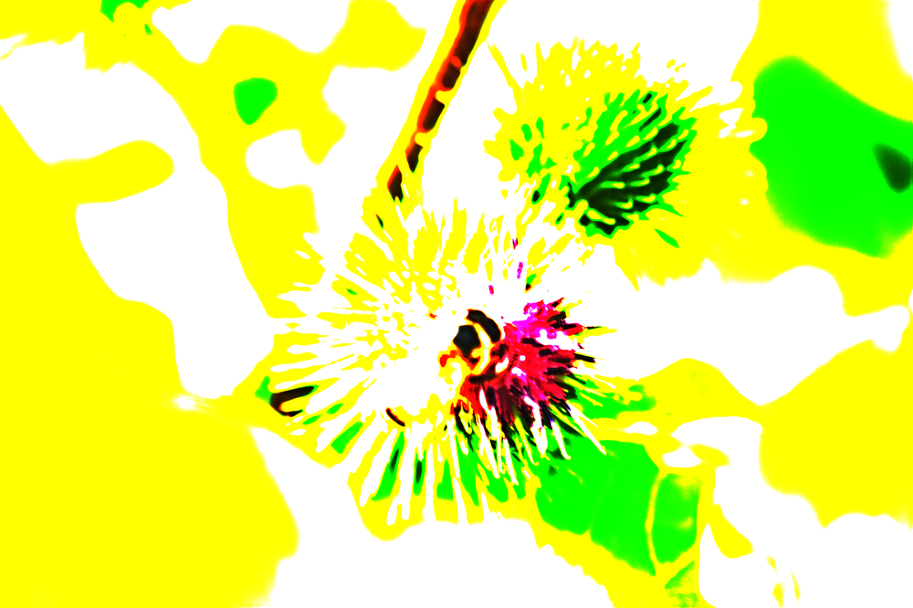surreal bee.jpg