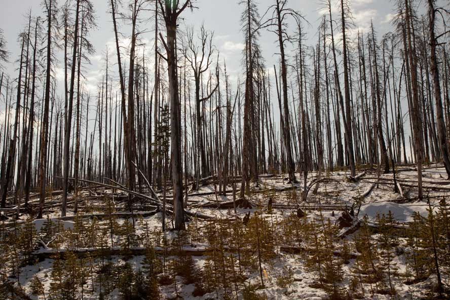 WY-Yellowstone-150512-027-burnt.jpg