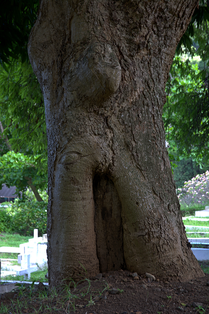 another tree creature.jpg