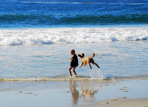 Carmel Beach - Flying Poodle.jpg
