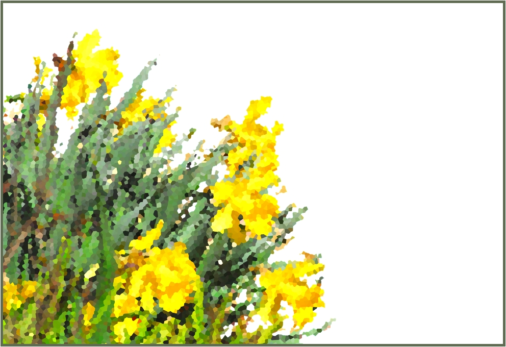 yellow_flowers1.JPG