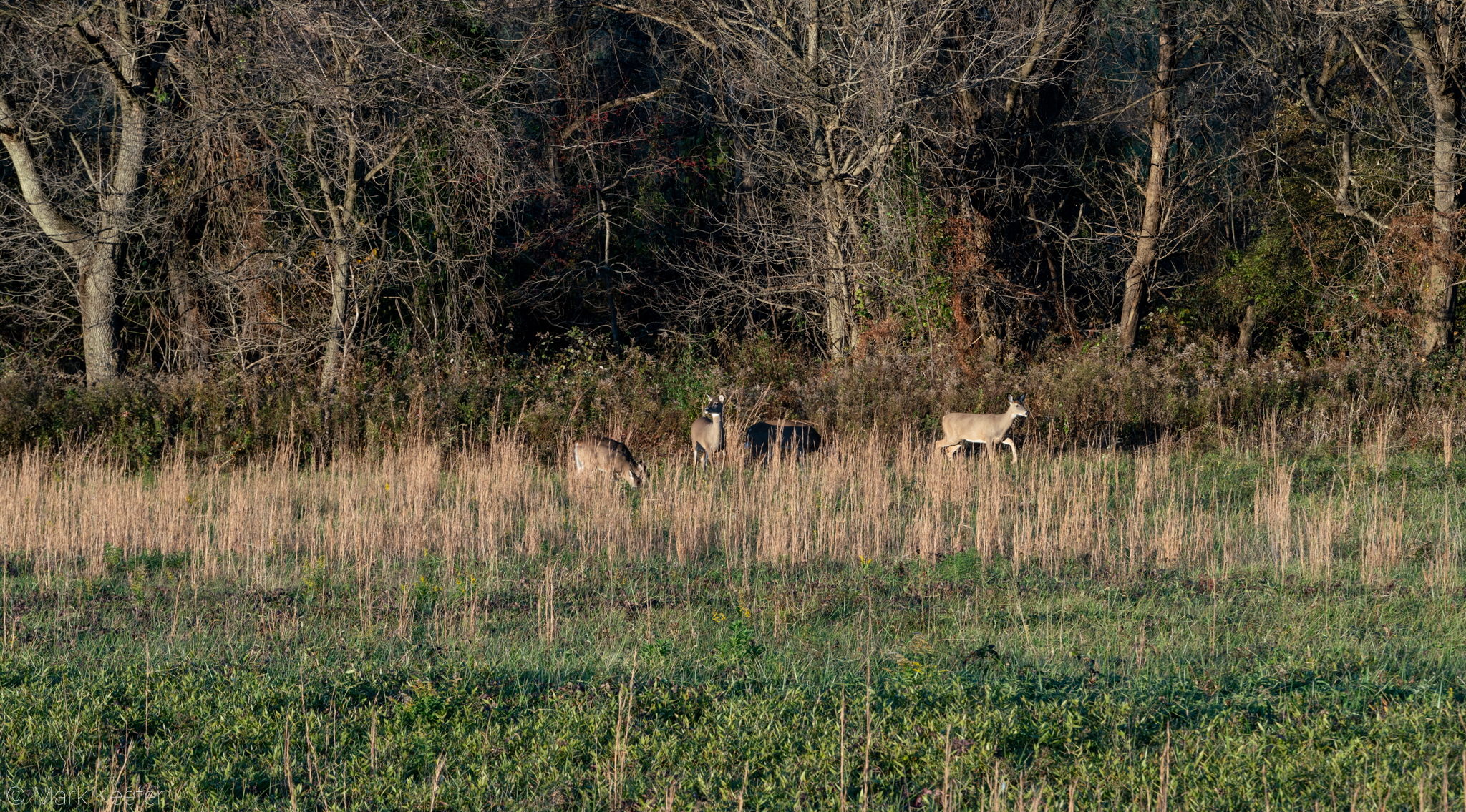 Deer at Tyler Sony - x2048-06849.jpg