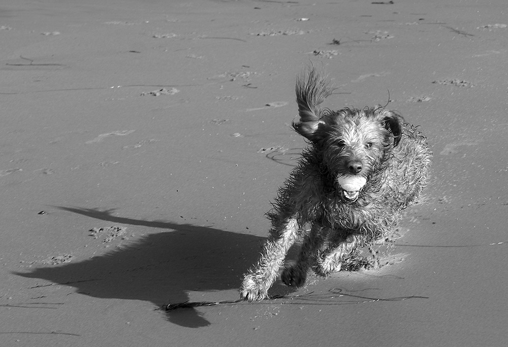 dog running on beach.jpg
