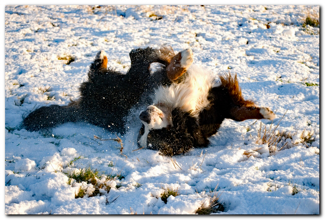 Dog snow-web.jpg