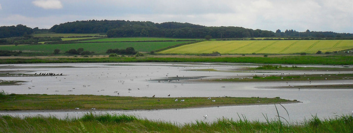 Cley - from North Hide 02.jpg