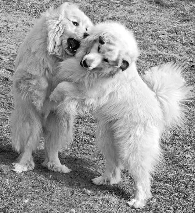 dancing-silly-puppies.jpg