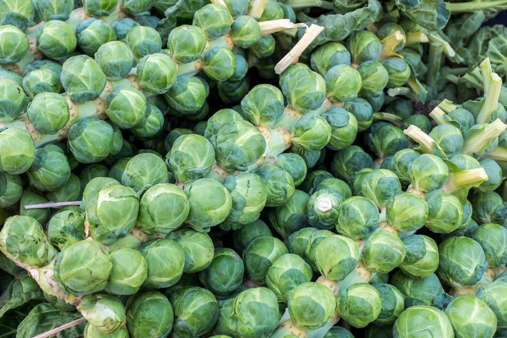 Sprouts_F1896-535-1.jpg