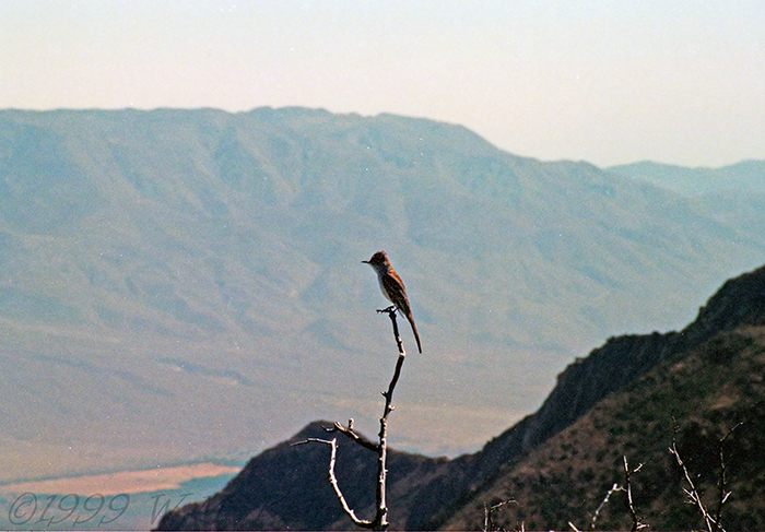 Bird Over Borrego R12a.jpg