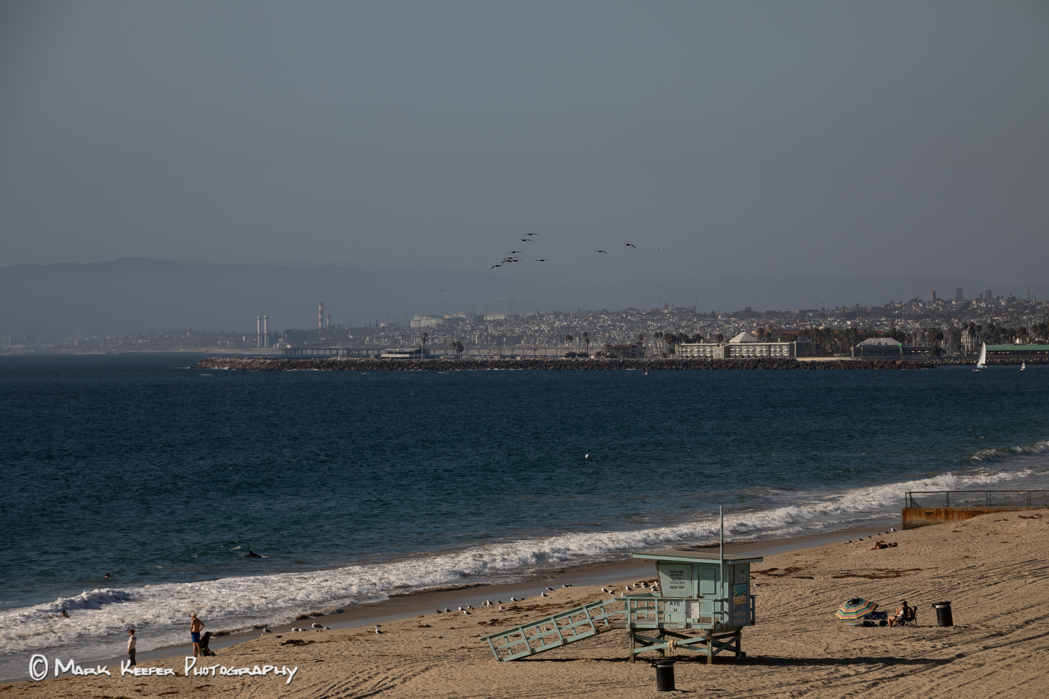 Pelicans in Souther Califirnia shoreline 5D 46379-1.jpg