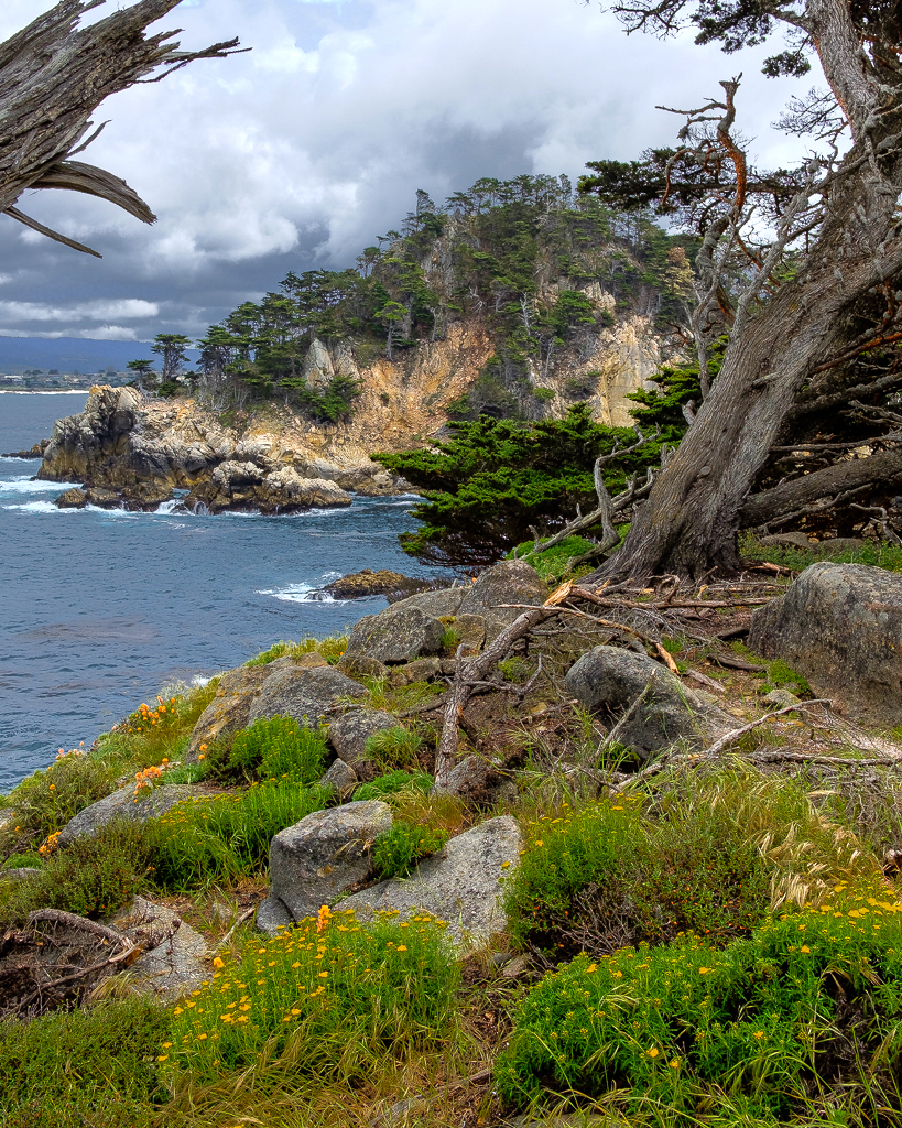 Point Lobos Spring 2 1024.jpg