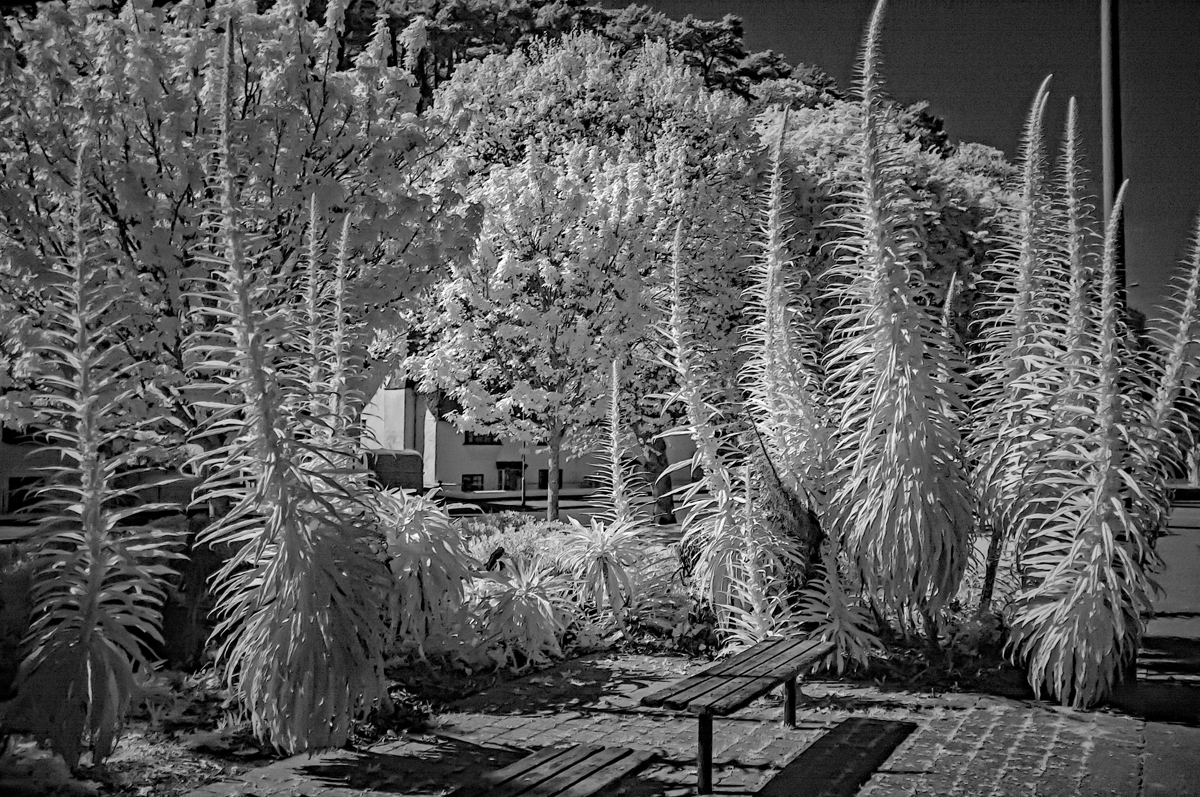 Esplanade display (Infrared)-web.jpg