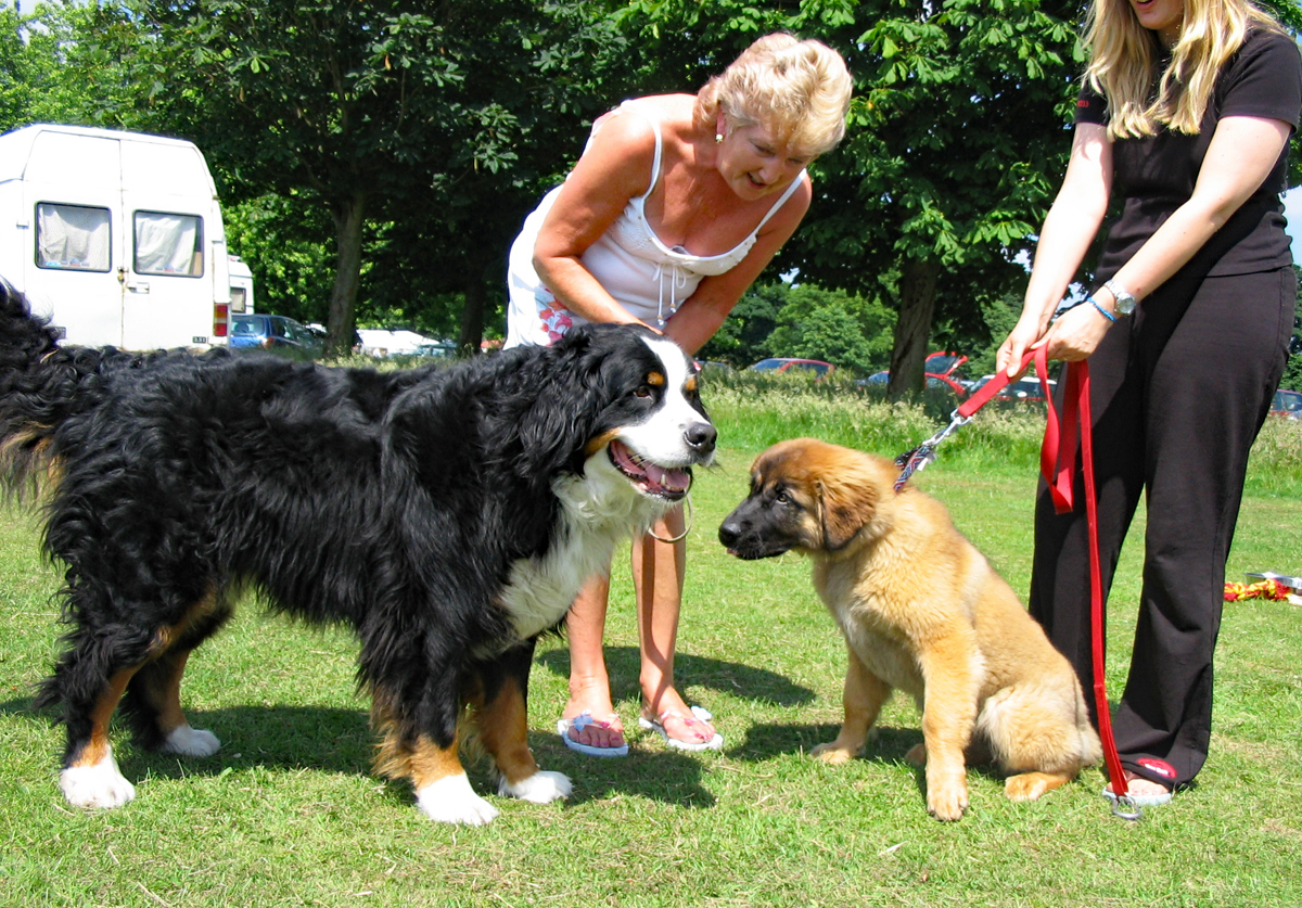 Dogs little large-web.jpg