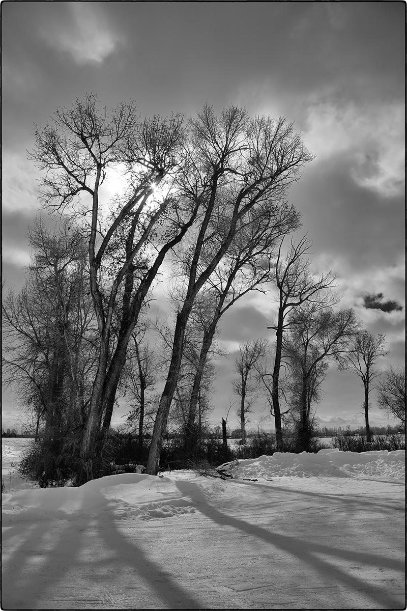 trees thornton boat dock winter BW.jpg