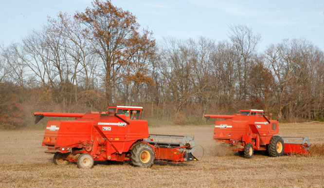IL-Kaskaskia-Bottoms-harvest-cre.jpg
