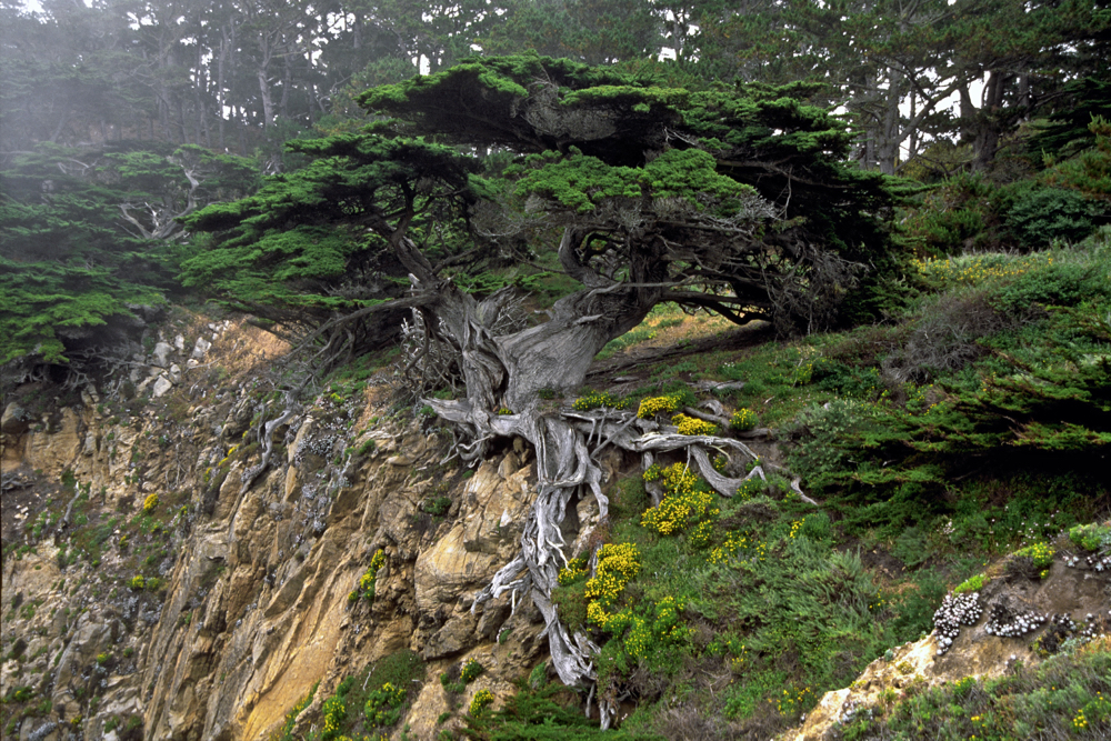 Point Lobos 10_1.jpg