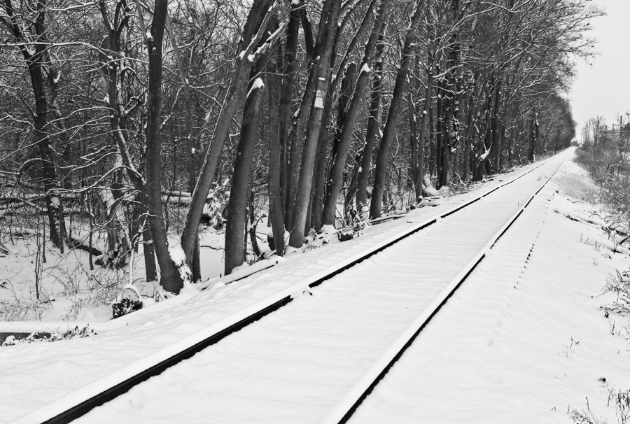Tracks_by_the_Woods-8245.jpg