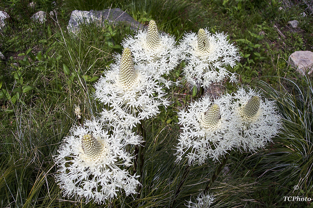 100_0902 Mountain Wildflowers.jpg