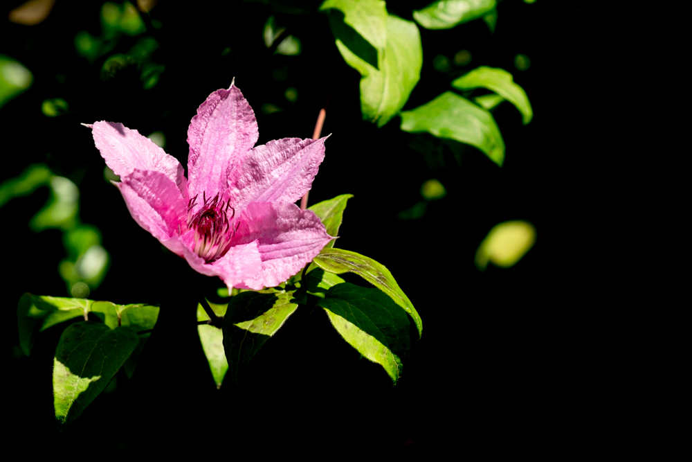 Flower&Shadow_F3634-605 (1 of 1).jpg