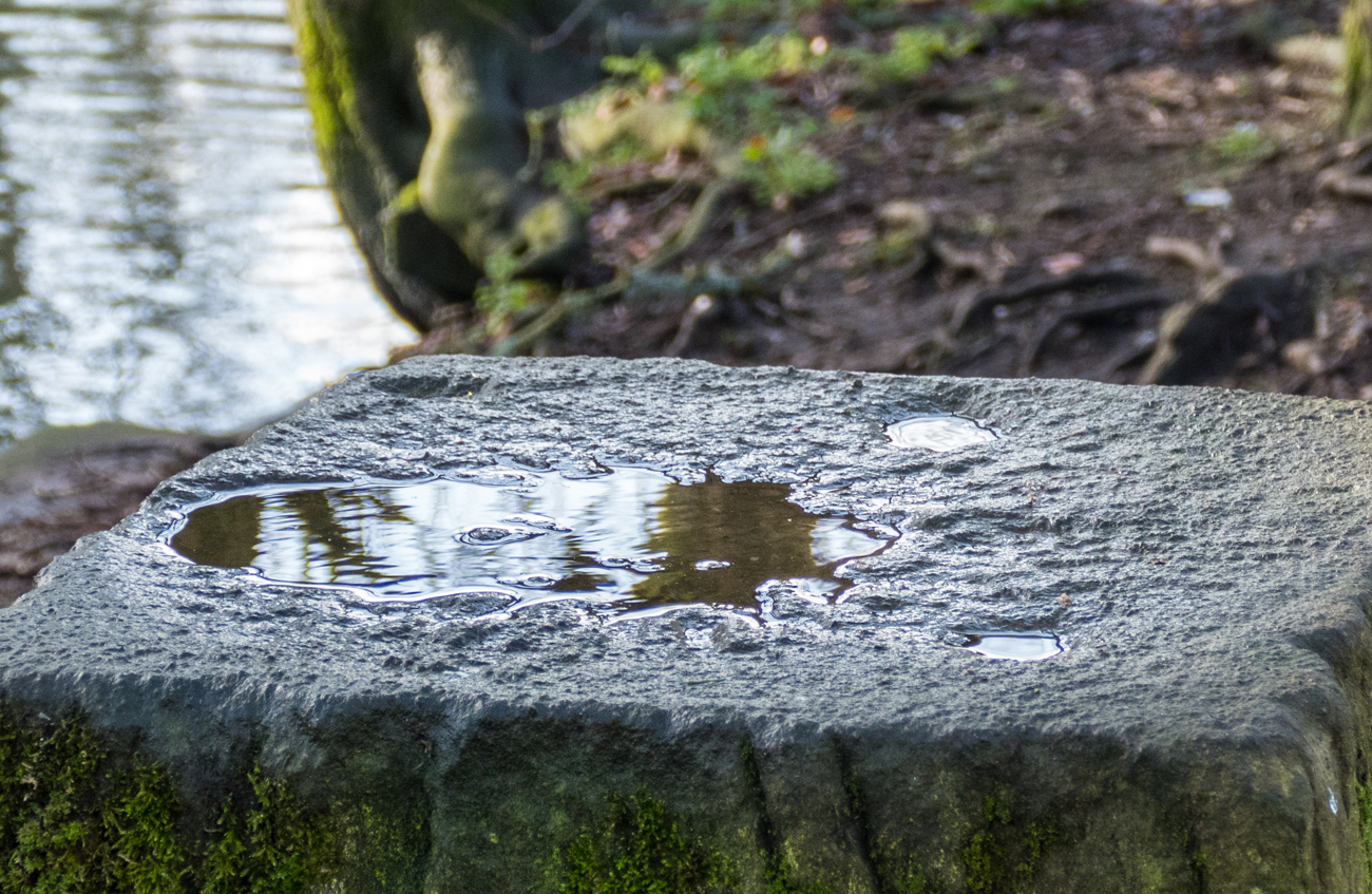 Reflection in puddle-web.jpg