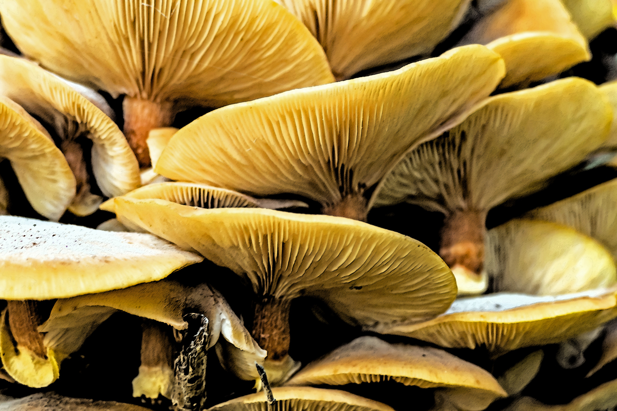Mushrooms 2-web.jpg