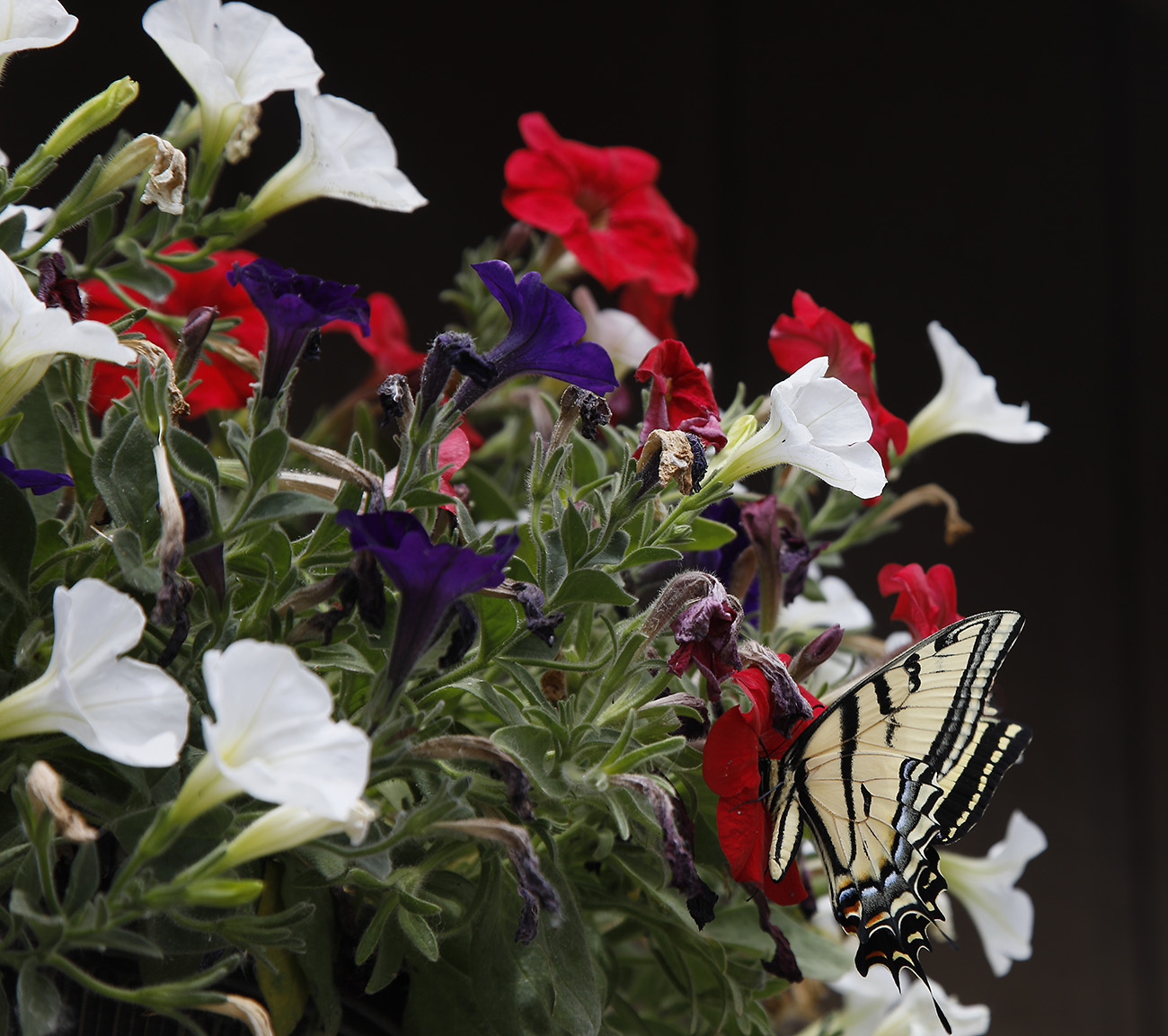 flowers and butterfly s.jpg